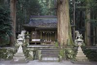 室生龍穴神社,拝殿 02698000180  写真素材・ストックフォト・画像・イラスト素材 アマナイメージズ