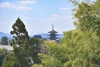 竹林の向こうに法隆寺