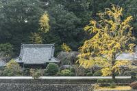大野寺 02698000199  写真素材・ストックフォト・画像・イラスト素材 アマナイメージズ