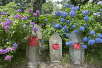 矢田寺の地蔵とアジサイ