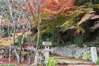 瓦屋寺石段と紅葉 02698000265  写真素材・ストックフォト・画像・イラスト素材 アマナイメージズ