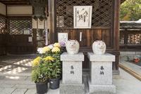 三尾神社,夫婦うさぎ像 02698000271  写真素材・ストックフォト・画像・イラスト素材 アマナイメージズ