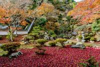 徳源院庭園の紅葉 02698000274  写真素材・ストックフォト・画像・イラスト素材 アマナイメージズ