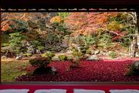 徳源院庭園の紅葉 02698000275  写真素材・ストックフォト・画像・イラスト素材 アマナイメージズ