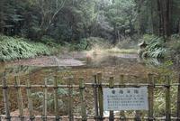 寄倍の池,大笹原神社境内 02698000284  写真素材・ストックフォト・画像・イラスト素材 アマナイメージズ