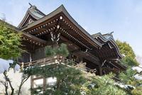 近江神宮外拝殿 02698000290  写真素材・ストックフォト・画像・イラスト素材 アマナイメージズ