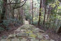 瓦屋寺,旧表参道石段 02698000293  写真素材・ストックフォト・画像・イラスト素材 アマナイメージズ