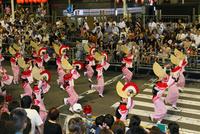 8月夏 徳島本場の阿波踊り