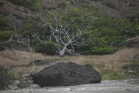 聟島列島 02701002423| 写真素材・ストックフォト・画像・イラスト素材|アマナイメージズ