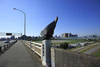六郷橋の国道15号線と多摩川緑地 02701012110| 写真素材・ストックフォト・画像・イラスト素材|アマナイメージズ