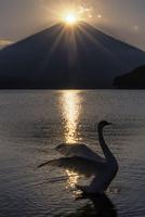 山中湖のダイヤモンド富士と白鳥 02702000006| 写真素材・ストックフォト・画像・イラスト素材|アマナイメージズ