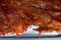 紅葉の河口湖と富士山 02702000038| 写真素材・ストックフォト・画像・イラスト素材|アマナイメージズ