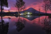 朝霧高原の池に映り込む夜明けの富士山