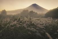 朝霧高原より望む夜明けの富士山とチカラシバ
