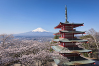 富士吉田市新倉浅間神社より望む富士山と五重塔と桜