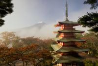 新倉浅間公園より望む五重塔と霧が晴れて現れる富士山