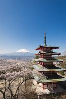 新倉浅間公園より望む五重塔と富士山と桜