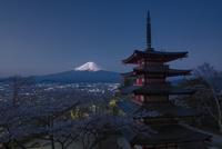 新倉浅間公園より望む五重塔と富士山と夜桜