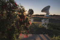 ポールワイルド天文台(Paul Wild Observatory)のブラシの木と電波望遠鏡 02702000186| 写真素材・ストックフォト・画像・イラスト素材|アマナイメージズ