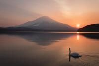 山中湖より望む富士山と夕日と白鳥 02702000222| 写真素材・ストックフォト・画像・イラスト素材|アマナイメージズ