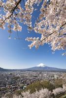 新倉山浅間公園より望む富士吉田市街越しの富士山と桜 02702000226| 写真素材・ストックフォト・画像・イラスト素材|アマナイメージズ