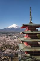 新倉山浅間公園より望む五重塔と富士山と桜 02702000227| 写真素材・ストックフォト・画像・イラスト素材|アマナイメージズ