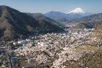 岩殿山より望む桜と大月市街と富士山 02702000276| 写真素材・ストックフォト・画像・イラスト素材|アマナイメージズ