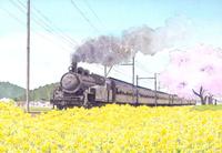 菜の花畑を走るSL列車 水彩イラスト 02723000019| 写真素材・ストックフォト・画像・イラスト素材|アマナイメージズ
