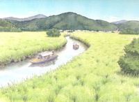 葦原の平原広がる水郷を屋形船で行く 水彩イラスト