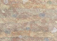 化石をモチーフにしたテキスタイル 02724000281| 写真素材・ストックフォト・画像・イラスト素材|アマナイメージズ