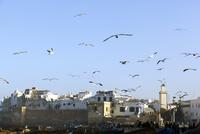 モロッコ エッサウィラのカモメと街 02728000097  写真素材・ストックフォト・画像・イラスト素材 アマナイメージズ