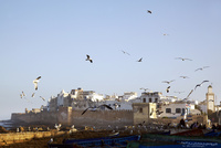 モロッコ エッサウィラのカモメと街 02728000098  写真素材・ストックフォト・画像・イラスト素材 アマナイメージズ