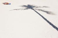 ヤシの影とビーチ
