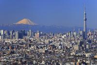 冬晴れの富士山とスカイツリー