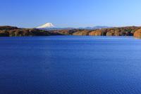 狭山湖より富士山を望む