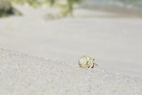 渚のオカヤドカリ