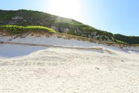 小笠原諸島南島・ヒロベソカタマイマイ半化石とカメの足跡