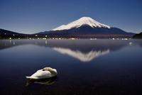 山中湖で眠る白鳥と月夜の富士山