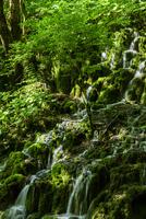 プリトヴィツェ湖群国立公園 連なる滝に射す斜光と一本の木