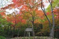 摂津峡公園 もみじ谷の紅葉