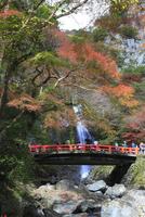 紅葉の箕面公園 箕面滝と滝見橋