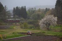 桜の奥羽本線