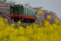 桜となのはな真岡鉄道