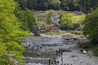 新緑の奥多摩 青梅線 多摩川
