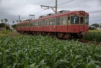 銚子電鉄 トウモロコシ畑の沿線