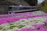 私鉄特急 西武鉄道「レッドアロー」と芝桜