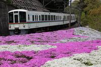 西武鉄道と芝桜