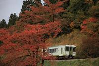 紅葉の飯山線