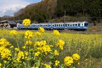 菜の花畑と伊豆箱根鉄道