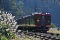 ススキの季節 しなの鉄道